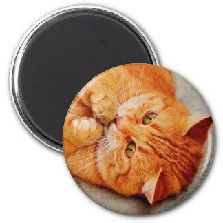 Cuddly Little Cat - Cute Kitty Print Magnet