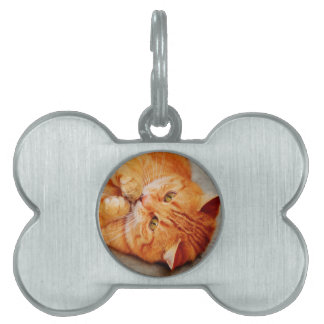 Cuddly Little Cat - Cute Kitty Print Pet Tag