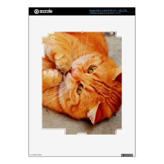 Cuddly Little Cat - Cute Kitty Print Skins For iPad 3
