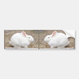 Cuddly White Bunny Car Bumper Sticker