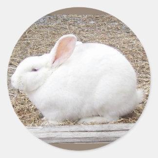 Cuddly White Bunny Classic Round Sticker