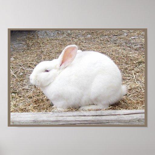 Cuddly White Bunny Print