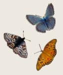 Cuello barco de 4 mariposas camisetas