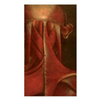 Cuello de la anatomía el   del vintage tarjetas de visita