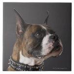 Cuello que lleva del perro, mirando lejos azulejos