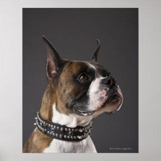 Cuello que lleva del perro, mirando lejos poster