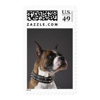 Cuello que lleva del perro, mirando lejos sellos postales