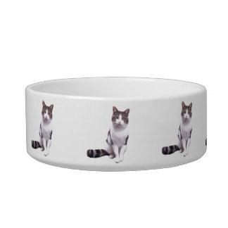 cuenco de alimentación del gato tazón para comida gato