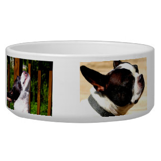 Cuenco de Boston Terrier Comedero Para Mascota