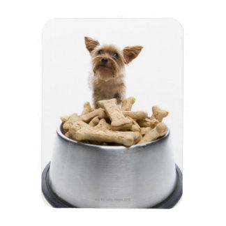 Cuenco de invitaciones del perro por Yorkshire Ter Imanes Flexibles