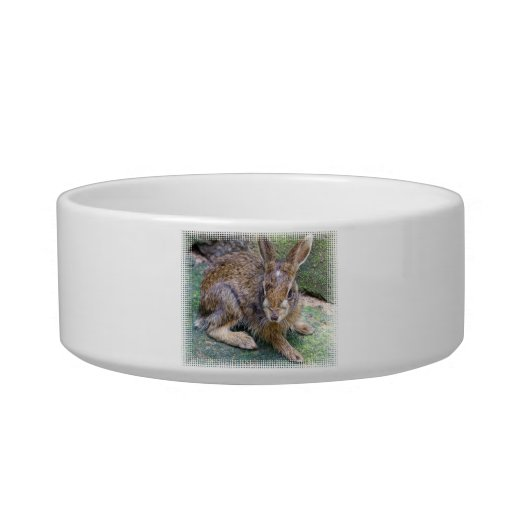 Cuenco del mascota de las imágenes del conejo boles para gatos