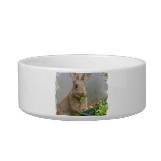 Cuenco del mascota del conejo de conejo de rabo bl tazón para comida gato