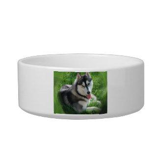 Cuenco del mascota del perro del husky siberiano tazón para comida gato