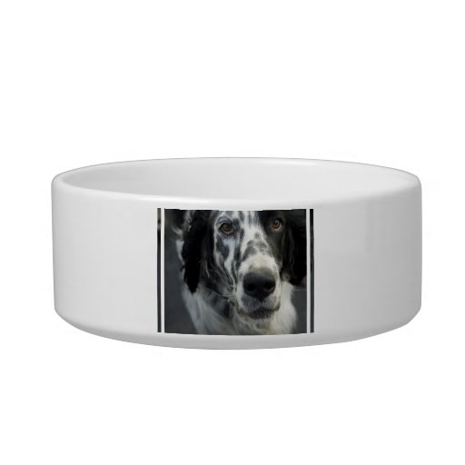 Cuenco del mascota del perro del organismo inglés tazones para gatos