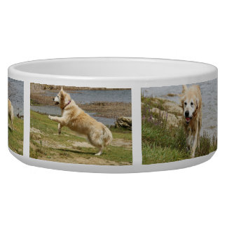 Cuenco del perro del golden retriever tazon para perro