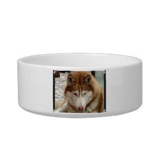 Cuenco fornido del mascota de Brown Boles Para Gatos