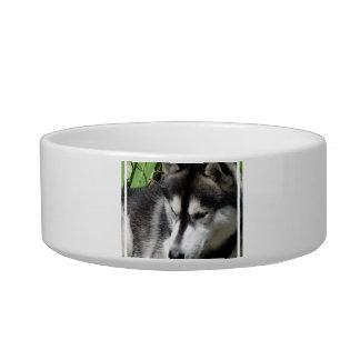 Cuenco fornido del mascota del perfil tazones para comida para gato