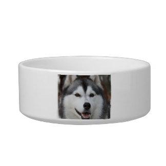 Cuenco fornido del mascota del perro bol para gato