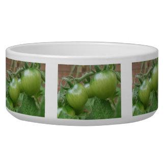 Cuenco verde del perro de los tomates tazón para perro