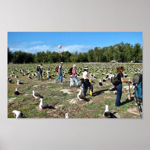 Cuenta de jerarquías del albatros de Laysan Impresiones