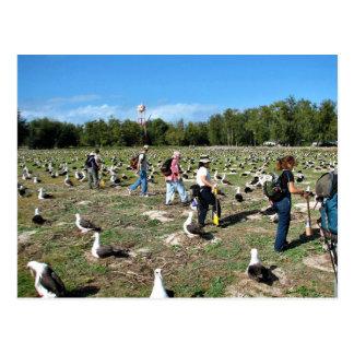 Cuenta de jerarquías del albatros de Laysan Postal