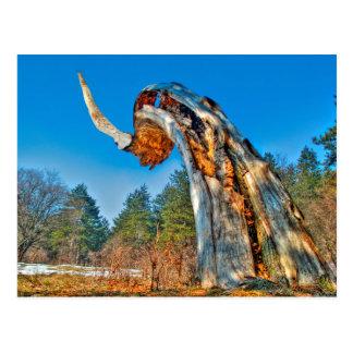 Cuerno gigante HDR (tronco de árbol viejo) Tarjetas Postales