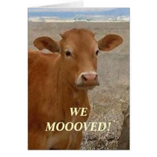 Cuernos rojos de la vaca - cambio de dirección tarjeta pequeña