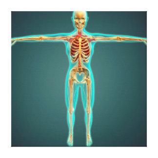 Cuerpo humano que muestra el sistema esquelético, impresión en lienzo