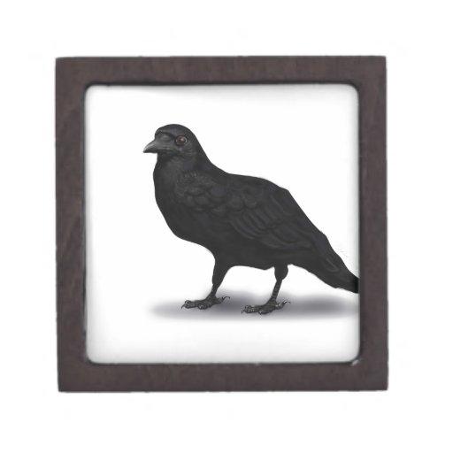Cuervo americano caja de joyas de calidad