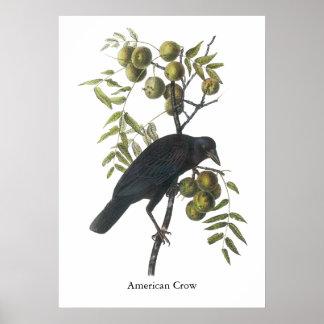 Cuervo americano John James Audubon Posters