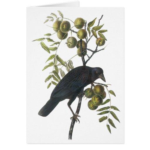 Cuervo americano, John James Audubon Tarjeta De Felicitación