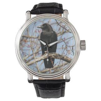 Cuervo americano reloj de mano