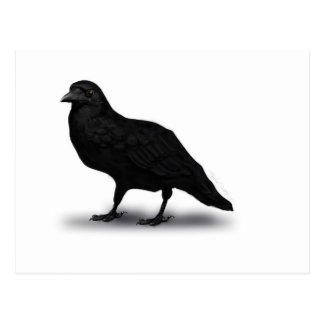 Cuervo americano tarjetas postales