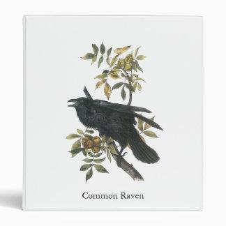 Cuervo común, audubon de Juan