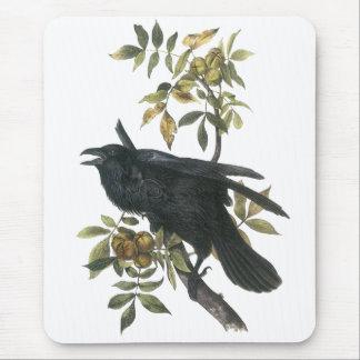 Cuervo común, audubon de Juan Mousepads