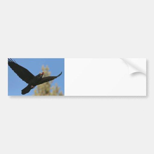 Cuervo con el bisonte etiqueta de parachoque