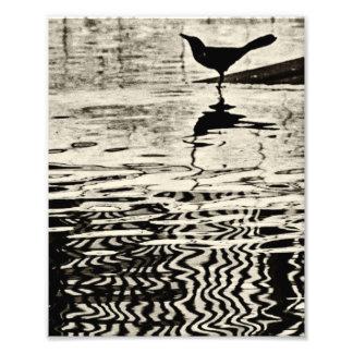 Cuervo con la reflexión en el agua - fotografía