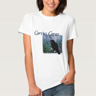 Cuervo de Corax del Corvus en bosque Playeras