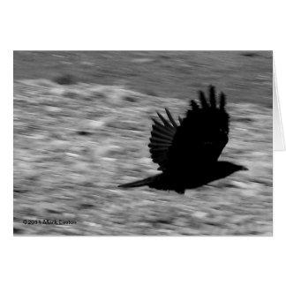 Cuervo de la bahía de Kachemak Tarjeta De Felicitación