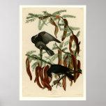 Cuervo de los pescados impresiones
