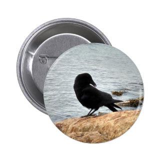 Cuervo de Vancouver Pin Redondo De 2 Pulgadas