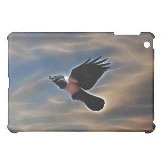 Cuervo del canto en vuelo