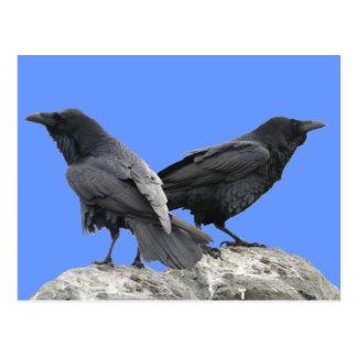 Cuervo del cuervo postales