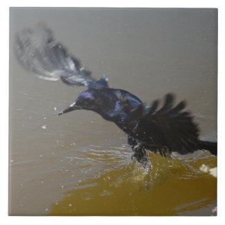Cuervo del pájaro de Grackle que salpica en teja d