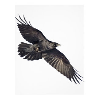 Cuervo del vuelo tarjeton