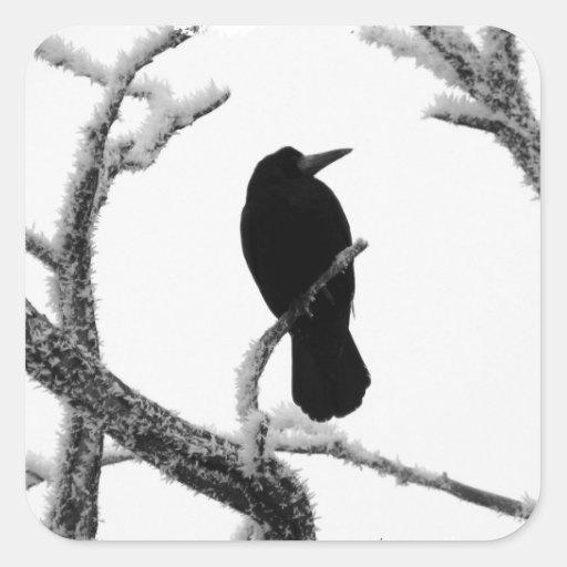Cuervo Edgar Allan Poe del invierno de B&W Pegatina Cuadrada