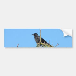 cuervo en el árbol pegatina para auto