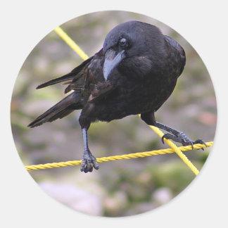 Cuervo en los cruces pegatinas redondas