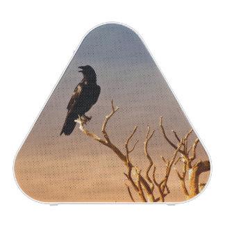 Cuervo en ramas de árbol Sunlit, Gran Cañón Altavoz