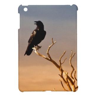 Cuervo en ramas de árbol Sunlit, Gran Cañón